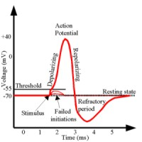actionpotential